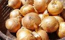 【ふるさと納税】北海道産玉ねぎ約20kg 【野菜類・ねぎ・玉ねぎ】 お届け:2018年12月中旬〜2019年2月下旬まで