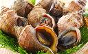 Foods - 【ふるさと納税】えりも産活真つぶ(大)約1kg 【魚貝類・加工食品】 お届け:2019年4月上旬〜2019年10月中旬まで
