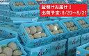 【ふるさと納税】盆明 津軽産 青肉メロンご家庭用約5kg4〜...