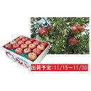 【ふるさと納税】11月 土岐りんご園 家庭用サンふじ約10k...