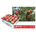 【ふるさと納税】12月 土岐りんご園 家庭用サンふじ約10k...