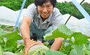 【ふるさと納税】青森県鰺ヶ沢町 糖度16度以上保証!!甘さに...