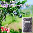 【ふるさと納税】冷凍ブルーベリー(5kg)