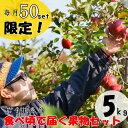 【ふるさと納税】農家から食べ頃で届く果物セット 9〜12月発...