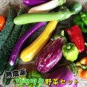 【ふるさと納税】ひばり農園の無農薬ワクワク野菜セット《6月より発送開始》