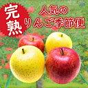 【ふるさと納税】[先行予約]【令和3年度産】完熟!人気のリンゴ季節便(約3kg)詰合せ