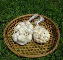 【ふるさと納税】石堂sunにんにく『福地ホワイト六片種』◆※...