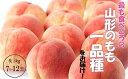 【ふるさと納税】FY18-809【先行予約】山形のもも【白桃...