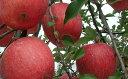 【ふるさと納税】FY19-326 山形産 無袋栽培ふじりんご 10kg