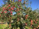 【ふるさと納税】 FY18-035 山形産 サンふじりんご ...