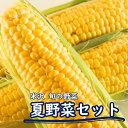 【ふるさと納税】夏の野菜セット(1)セブンティーントウモロコ...