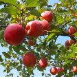 【ふるさと納税】A-57 満足りんご(品種おまかせ)10Kg
