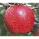【ふるさと納税】りんごとラ・フランス3kg