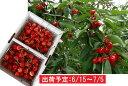 【ふるさと納税】山形県産 佐藤錦1.2kg・バラ詰め秀M 【...