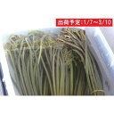 【ふるさと納税】山形県産戻しわらび1.2kg 【野菜・山菜・...