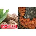 【ふるさと納税】土里芋2kg原木なめこ1kg 【野菜・根菜・...