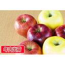 【ふるさと納税】ご自宅用旬のりんご詰合せ約10kg(サンふじ...