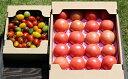 【ふるさと納税】いわき産トマト詰合せボックス