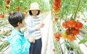 【ふるさと納税】ワンダーファーム農業体験券・ランチ付(大人ペア)