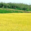 【ふるさと納税】北條農園の特別栽培米(コシヒカリ) 20kg...