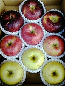 【ふるさと納税】北條農園のりんごの味比べ 中箱