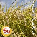 【ふるさと納税】福島県大玉村産コシヒカリ5kg(令和元年産!...