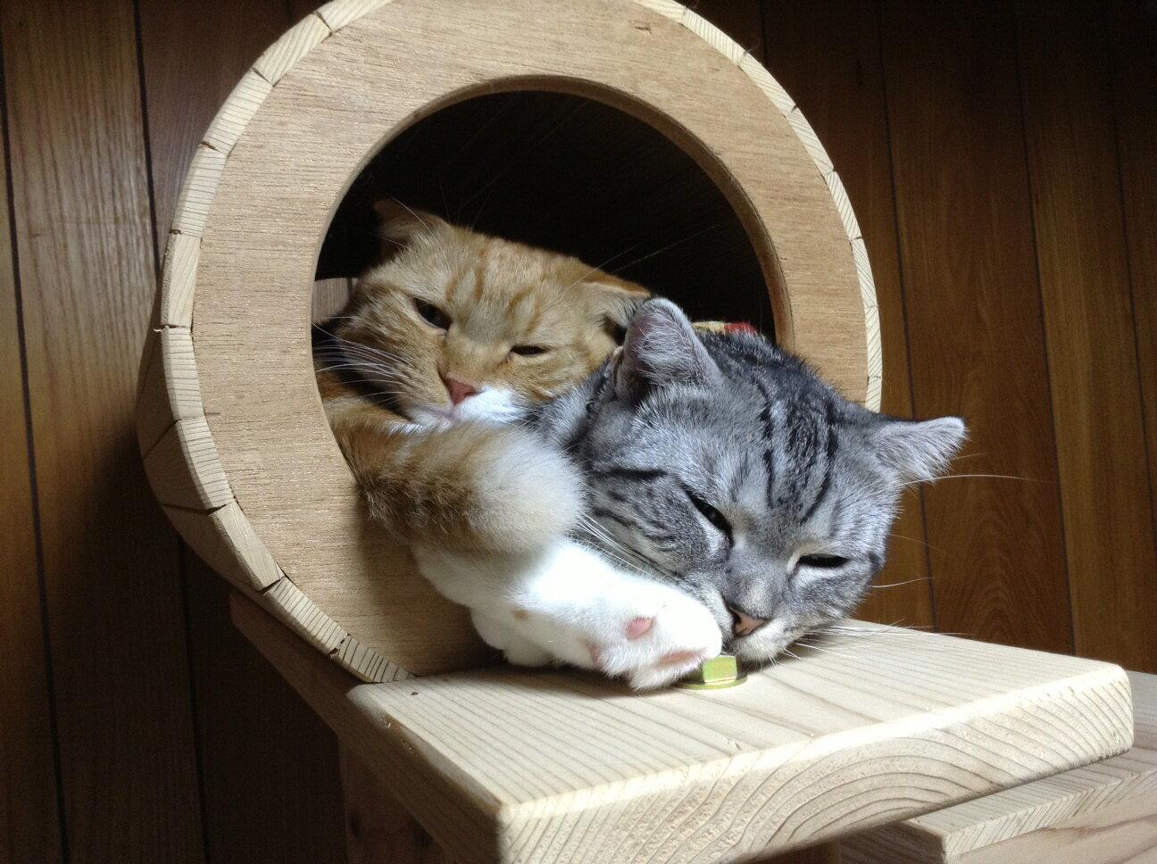 【ふるさと納税】木のキャットタワー「猫まみれツリーハウス」