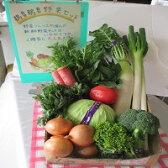 【ふるさと納税】A-9日立市産 新鮮野菜セット