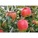 【ふるさと納税】B-9日立市産りんご