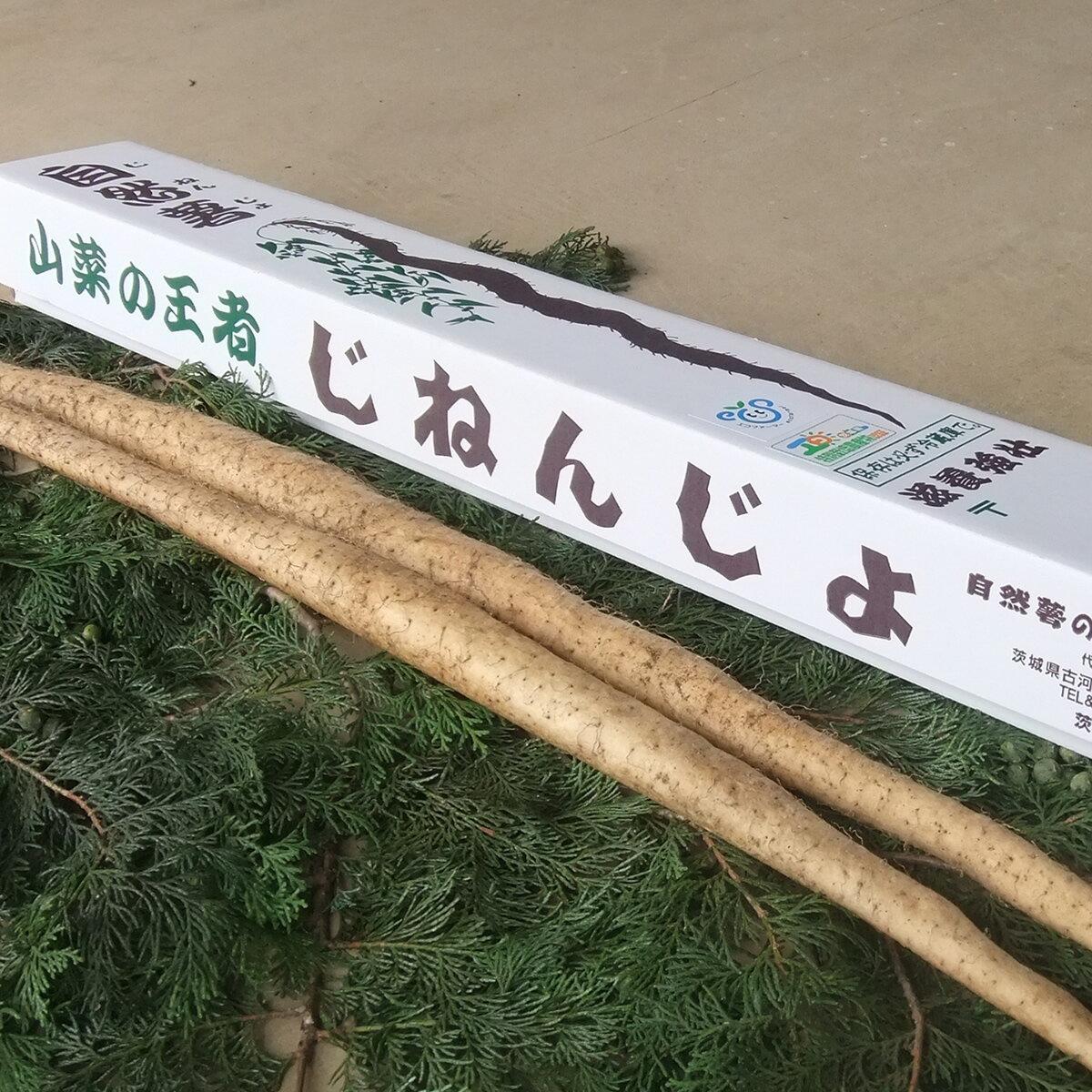 【ふるさと納税】《お歳暮》「エコファーマー・特別栽培農産物認証農家」荒井さんが育てた自然薯 1.3kg