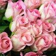 【ふるさと納税】生産農家直送!!お得な大輪のバラ花束20本セット