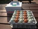 【ふるさと納税】AG08_江原ファーム 地養卵&アローカナハーフセット(計50個)