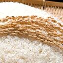 【ふるさと納税】茨城の大粒新人 特選ふくまる 特別栽培米10kg(白米発送) 【お米・精米】