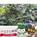 【ふるさと納税】横田さん家の完熟ブルーベリー 4パック...
