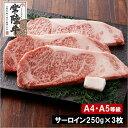 【ふるさと納税】常陸牛サーロインステーキ750g(250g×3枚)