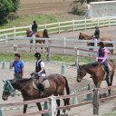 【ふるさと納税】体験乗馬 メンバー体験コース...