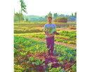 【早い者勝ち!セール開催中!】九州 熊本県 宇城市 小川町 特産品 おふくろの味 熊本県宇城市小川町特産品詰合せ
