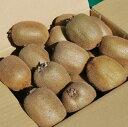 キウイフルーツ キウイ ヘイワード 2.7kg 減農薬 未追熟 バラ詰め 2021年1月1日〜1月31日発送分 まるり