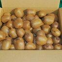 キウイフルーツ キウイ ヘイワード 5kg 減農薬 未追熟 バラ詰め 12月1日〜12月31日発送分 まるり