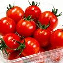 【ふるさと納税】\まるでフルーツ/◇【朝どり直送】高糖度ミニトマト「宝玉丸」2.4kg