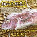 【ふるさと納税】◇鯛の上総蒸し【大きな真鯛が丸ごと1尾!】
