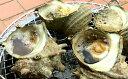 【ふるさと納税】漁協からの贈り物(房州産天然大さざえ 約2.5kg)5651-0956(クラウドファンディング対象)