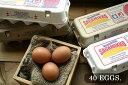 【ふるさと納税】【かながわブランド認定】平飼い有精卵さがみっこ 40個入