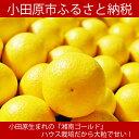 【ふるさと納税】ハウス湘南ゴールド(期間限定・数量限定)