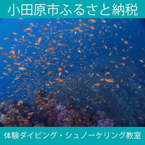 【ふるさと納税】海の中をのぞいてみよう!体験ダイビング・シュノーケリング教室