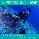 實用的權利 - 【ふるさと納税】ガイド・レンタル代込み!ファンダイビング【2ビーチ】