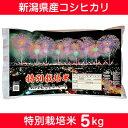 【ふるさと納税】Z8-001 【29年産】新潟県長岡産コシヒカリ(特別栽培米)5kg