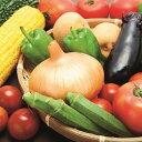 【ふるさと納税】C31 季節の野菜おすすめセット