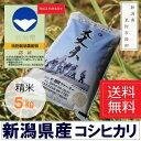 【ふるさと納税】新潟 特別栽培米 新米 コシヒカリ 「大丈夫...