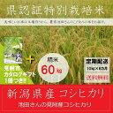【ふるさと納税】新潟 特別栽培米 新米 コシヒカリ 「池田さ...